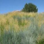 Some grass inspiration.