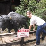Apparently riding the buffalo is a problem at Lookout Mountain.