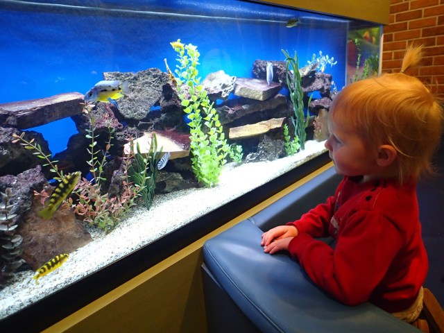 Fascinated by an aquarium at the Museum of Nature and Science.
