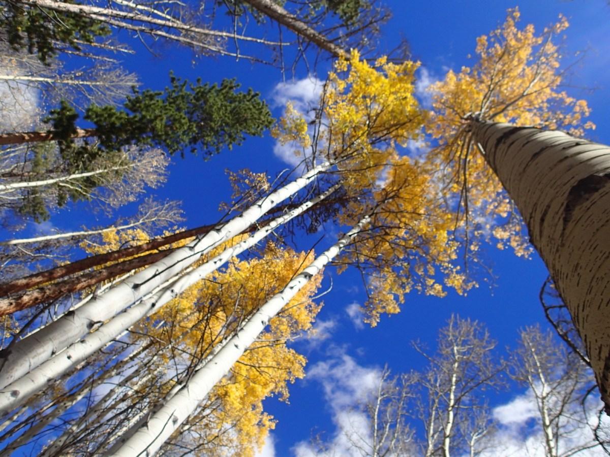 Beautiful fall colors.