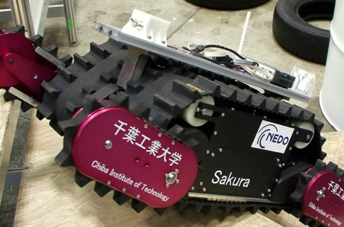 fukushima-sakura