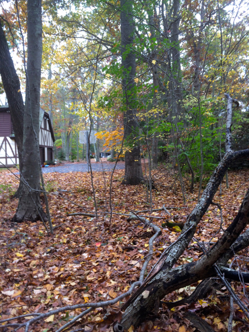 trail heads down a driveway
