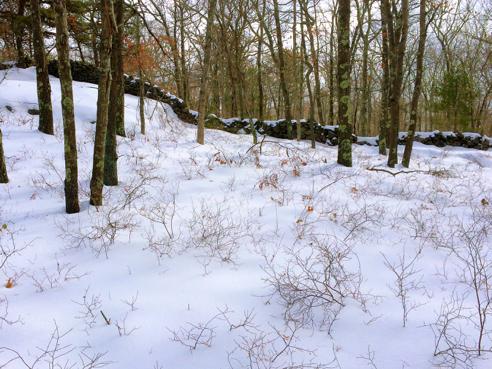 snowy francis carter rockwall
