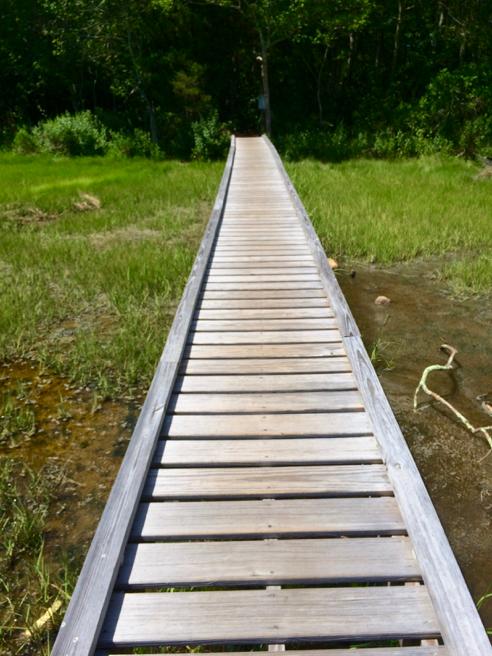 Boardwalk Across the Marsh
