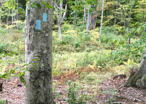 The Narragansett Trail