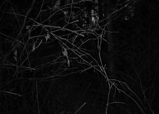 Aurelie-Sorriaux-Photographer-Howling#4
