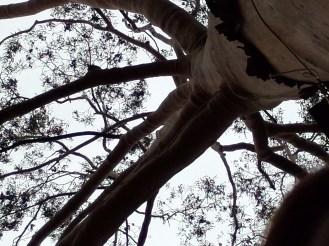 Oppo-N1-Tree