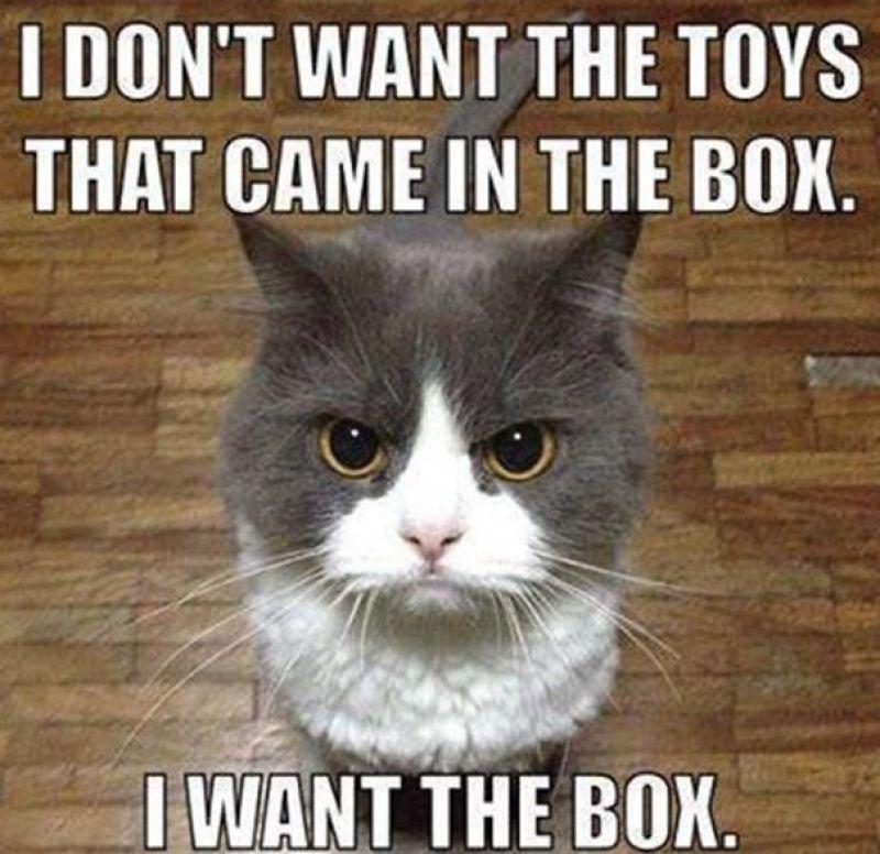 Top-30-Funny-Cat-Memes-Funny-humor