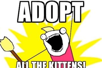 adopt-kittens-meme