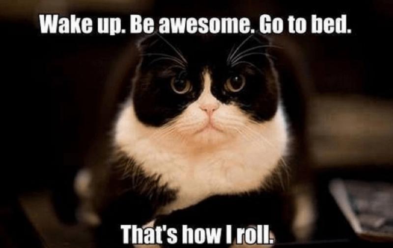cat-memes-9