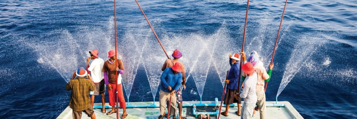 Maldive gutting fish Use this with a quote or copy line to speak directly with your customers.