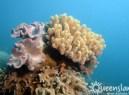 Excursion sur la Grande Barrière de Corail : conseils