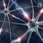 Los niños con autismo tienen más neuronas