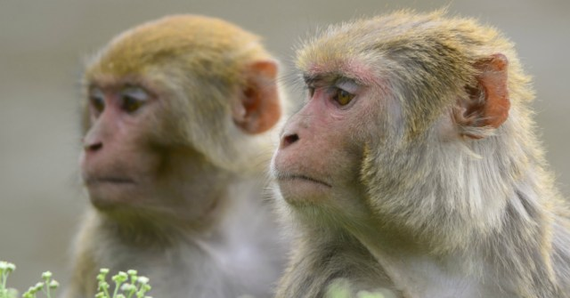 12.06.16 - Monkeys