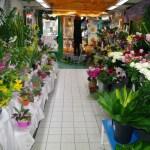 Fleurs de Toussaint magasin
