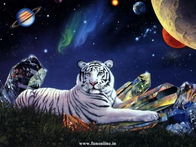 Tiger And Lion Wallpapers (34 Wallpapers) – Adorable Wallpapers
