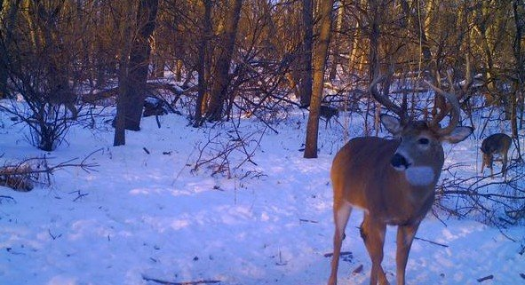 3rd main beam buck trailcam