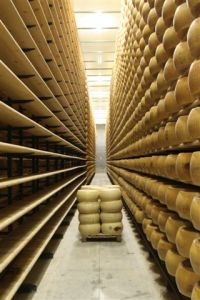 Shelves of Parmigiano Reggiano