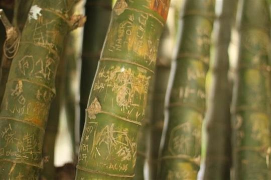 Victoria Peak Bamboo Graffiti Hong Kong