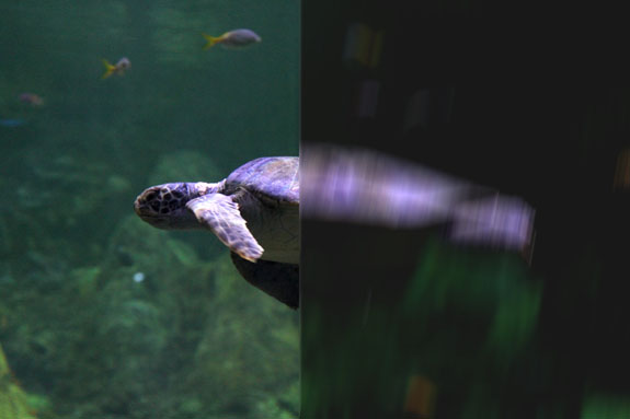 Simulated Blurry Turtle Photo