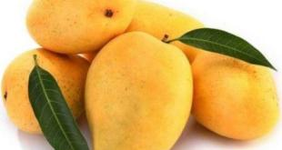 Health benefits of mangoes