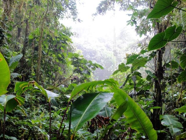 MonteverdeForest
