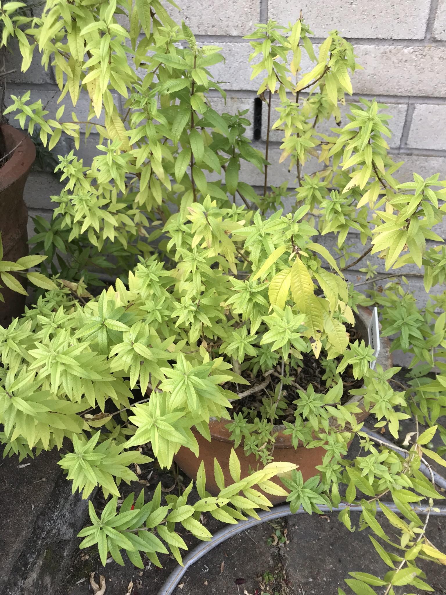 Herbs and Summer Gardening
