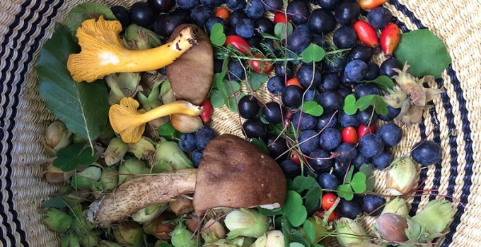 Scotland's first Foraging Fortnight