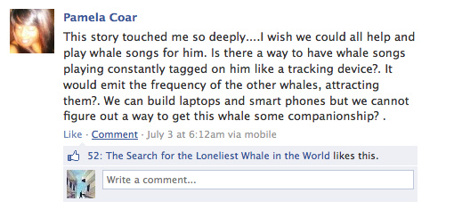 lonely whale response