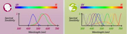 mantis colour range