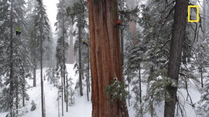 Die größten Bäume der Welt