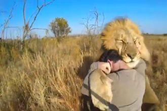 GoPro Lion Hug Screenshot