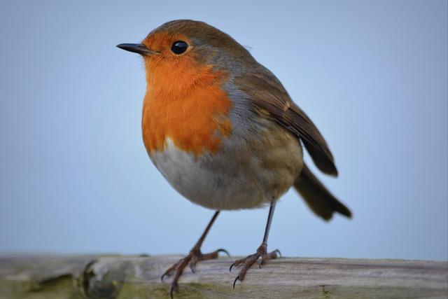 Birdnerds aufgepasst! Hier kommt die Vogelstimmen Erkennungs-App Warblr
