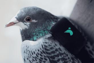 pigeonair_closeup-1200x800