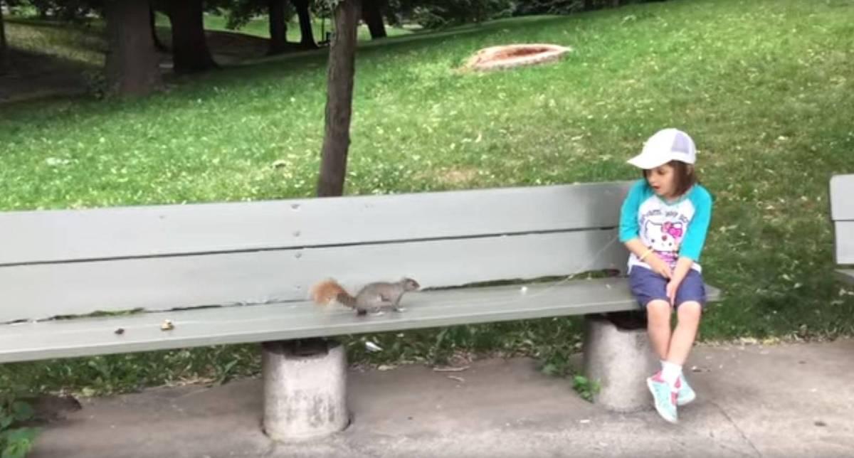 Den Milchzahn von einem Eichhörnchen ziehen lassen