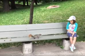 Squirrel toothfairy Screencap