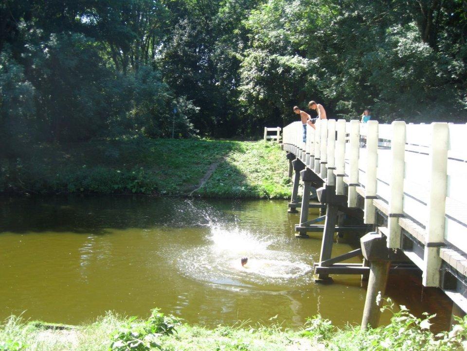 amsterdamsebos swim