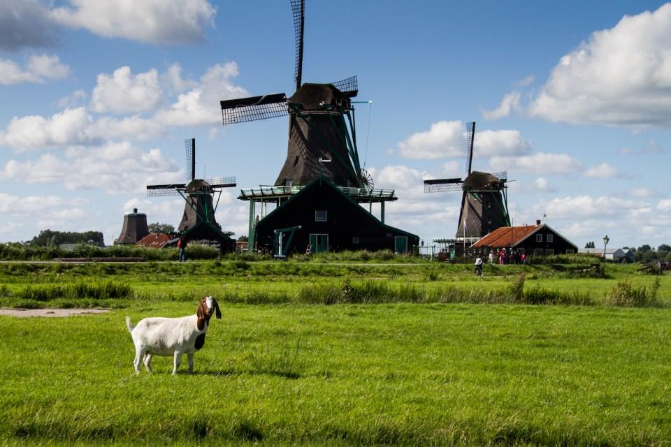 zaanse schans windmills near amsterdam