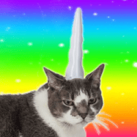 Cat Unicorn Horn