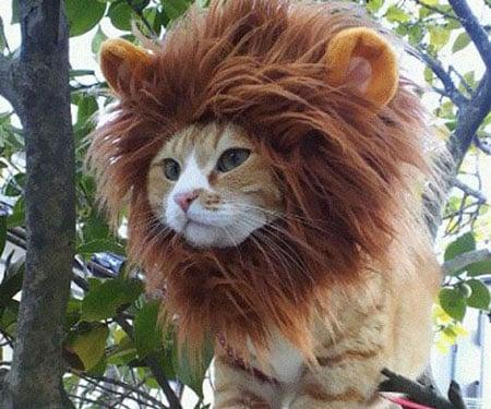 Lion Pet Cat Hat - coolthings.us