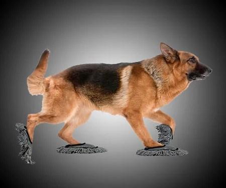 Doggie Floor Dusting Slippers