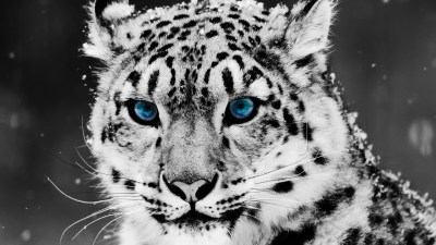Animals Wallpaper Set 1 « Awesome Wallpapers