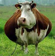 Cowabunga Janie!  Don't let Ronald MacDonald get a load a you.