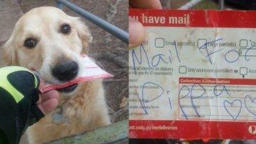 mailman-writes-mail-for-dog-696x362
