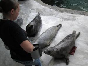 IMG_0239 sea lions
