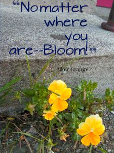 where you are bloom imagequote