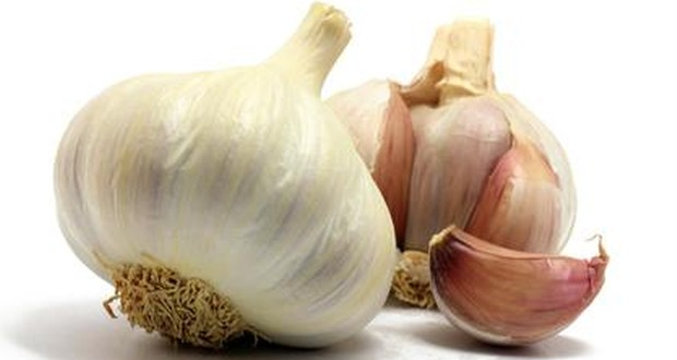 Garlic as the best herbal medicine