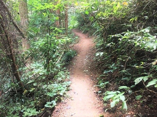 高尾山2号路ハイキング