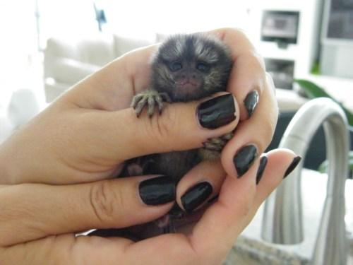 Medium Of Puppy Baby Monkey