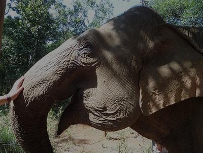 Responsible Elephant Encounters in Mondulkiri